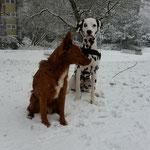 Mokusch und ich im Schnee