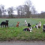 Hundeverein Truppe