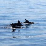 Delfine am Weg