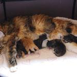 Dagmar et ses 5 petits