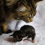 Intox et son petit
