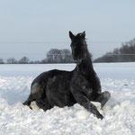 Tamilo im Schnee