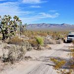 Piste in der Mojave