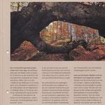 Waldbilder von mir finden sich jedes Jahr im Waldzustandsbericht der Landesforsten