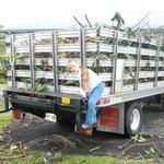 庭掃除で出た枯れ木はトラック3台分