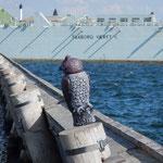 Yachthafenerweiterung in Faaborg