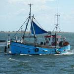 Fischkutter einlaufend Faaborg