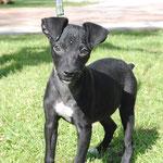 MILKA-Puppy