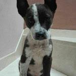 MIA-Puppy