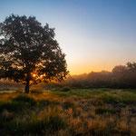 Sonnenaufgang Mehlinger Heide