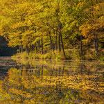 Spießweiher bei Eppenbrunn im Herbst