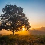 Morgenstimmung Lochbusch-Königswiesen bei Geinsheim