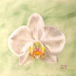 Orchidee weiß, Pastell, 36x26cm.
