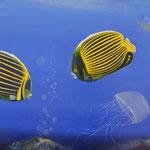 Das Bild zeigt die unterschiedlichen Charaktere. Fisch Nr. 1 freut sich über das aufsteigen der Gasblasen, Fisch Nr. 2 ist skeptisch, die Qualle ergreift die Flucht.