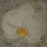 befreit, Pastell, 27x20cm.