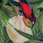 En rouge et vert - Tangara - 38 x 29 - À VENDRE