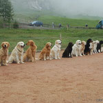 Obedience Arosa 2005