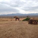 слоны в национальном парке Тсаво