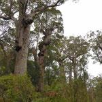 Tingle Tree's