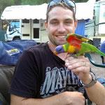 Clare Valley - Rainbow Lorikeet auf dem Camping