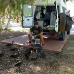 Hasen und Enten auf dem Camping