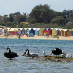 Beachboxen in der Bay von Melbourne