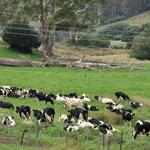 Innland Farm