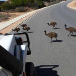 Denham, Emu-Familie