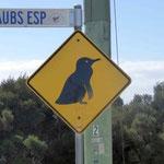 Pinguin gefunden