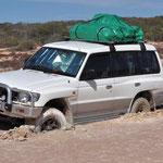 Francoise Perron Nationalpark - Asiat in Salzpfanne stecken geblieben