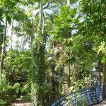 Botanic Garden Adelaide