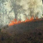 Kakadu NP Bushfire