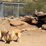 Dingo`s Outback Park Alice Springs