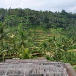 Bali Reisplantagen