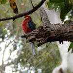 Viele farbige Vögel