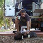 Hasen auf dem Camping