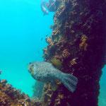Navi Pier - Open Water Diver Course - Tauchpreuvez bestanden :-)