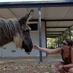 Wyndham - Esel vom Campingplatz