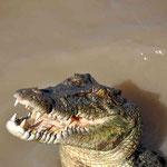 Jumping Krokodile Farm