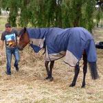 Pferd von Desiree