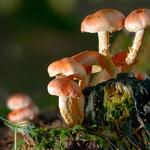 Kategorie 4 Pflanzen und Pilze: Erleuchteter Trupp