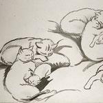 """D10 """"étude de chats endormis"""""""