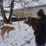 Erste Schritte im Schnee noch mit Sicherheitsleine - auch wegen dem Elektrozaun