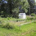 Garten mit neuem Tomatenhaus