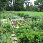 etwas Wildnis muss sein - auch im Garten