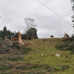Bei uns und auch bei vielen Nachbarn gab es grosse Schäden, an den Tannen und auch an den Gebäuden