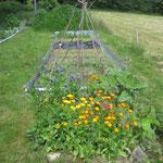 Rechts sieht man die gemähte Fläche und vorne die Blumeninsel