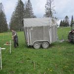 3. Juni: Unser Nachbar bringt 27 Merino Schafböcke