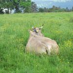Undina zufrieden im satten Gras