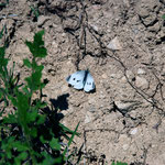 Butterfly behind Khirokitia neolithic site